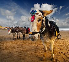 Patch - Beach Donkey by pixelda