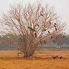 A leafless tree, home to a large number of big birds in the middle of a ground by ashishagarwal74