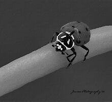 Red Hot Lady 2   ( Ladybug Series ) by Carla Jensen