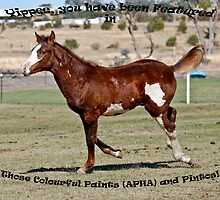 Banner for 'Those Colourful Paints (APHA) and Pintos! by Kat36