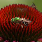 Greenie by Ozlem E