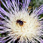 Tiny Bee by R&PChristianDesign &Photography