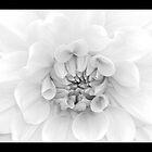 White by Lyana Votey