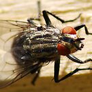 Bug-eyed by Rhys Herbert