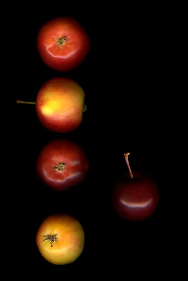 Crab Apples Row by Marsha Tudor