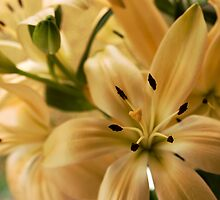 Peach lilies by Photopixels