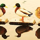 Nice Day For Ducks by Jessica Rogers