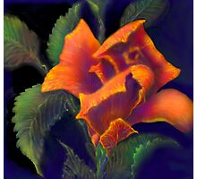 'Orange Delight' Digital Rose Painting, Baroque Roses Photographic Print