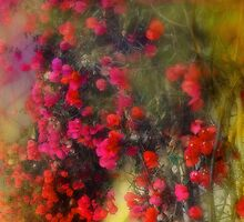 Red Bougainvillea Impression by Lorrie Morrison
