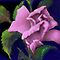 &#x27;Pink Parfait&#x27; Digital Rose Painting, Baroque Roses by luvapples downunder/ Norval Arbogast