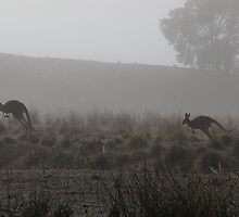 Roos on the Run by Joy & Rob Penney