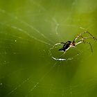 Itsy Bitsy spider by Donna Rondeau