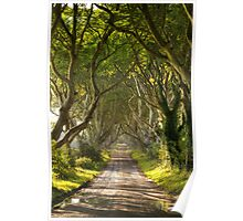 The Dark Hedges Poster