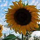 Folow the Sun by Luís Lajas
