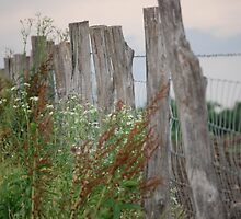Fence by Kinsey Dean