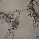 Humming bird by Aestheticz .