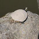 A turtle blending in by WaleskaL