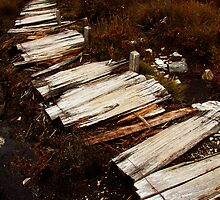 Waterfall Valley to Lake Windermere, Overland Track, Tasmania by Roger Barnes