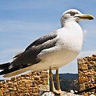Seagull - Tossa de Mar by NeilAlderney