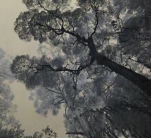 Grey Ghosts by lightsmith