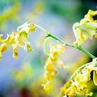 Spiraling Orchids by Loriene Perera