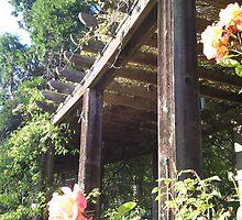Berkeley Rose Garden by Kate Hoppe