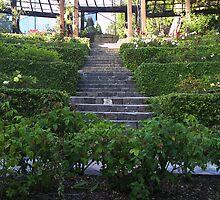 Berkeley Rose Gardens by Kate Hoppe
