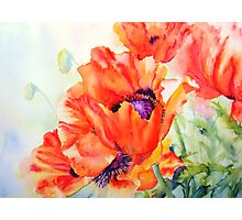 Song of Summer Photographic Print