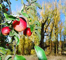 apples and cottonwoods by Lenny La Rue, IPA
