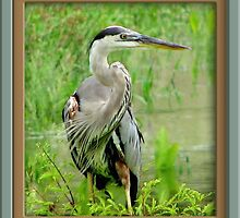 Great Blue Heron by George  Link