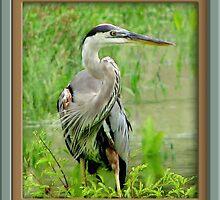 Great Blue Heron by George  Link