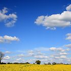 Saffron Walden Farmland in Spring by Dave Law