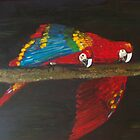 Parrots by Monika Howarth