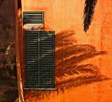 The palm shadow by Barbara  Corvino