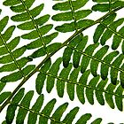 Fern Patterns by Victoria Kidgell