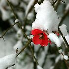 Snow Flower by Nancy Carman