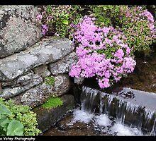 Meditation Gardens by Lyana Votey