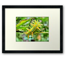 Spikey Framed Print