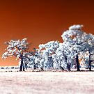 Trees ~ Infrared HDR &#x27;Tilt-shift&#x27; Panorama by Pene Stevens