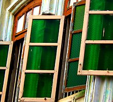 Seeing things in green light... by Tamara Travers