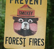 Prevent Forest Fires  by cindylu