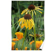 Cone Flowers & Poppies Poster