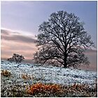 A Frosty Morning by Eliza-mac