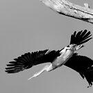 """ Take off "" by helmutk"