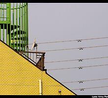 High Wire Housing by Lyana Votey