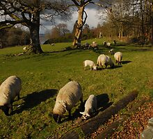 Sheep may safely graze ................ by Billlee