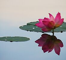 Tranquility by Steven  Siow