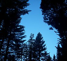 Sequoia National Forest by 37giggles