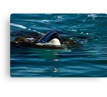 Play Time - Orca Whale Canvas Print