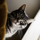 Curious Cat by Areej